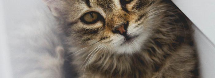 Feline Fear